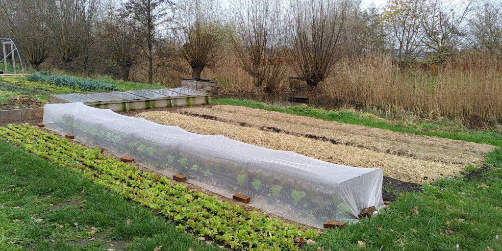 groenteproductie lokaal